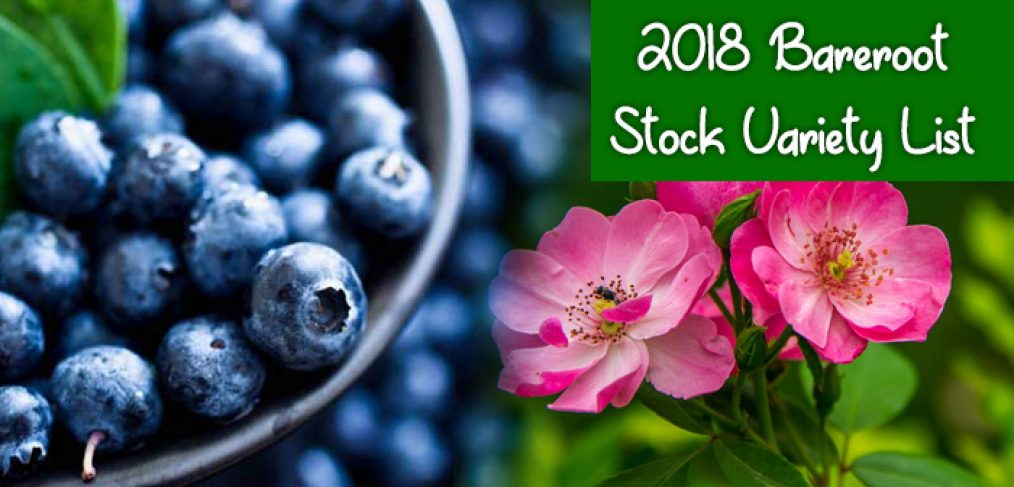 2018 Bareroot Stock Variety List