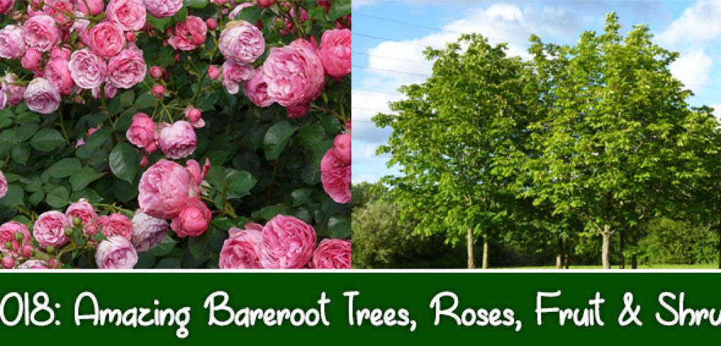 5 Reasons You Should Jump on Planting Bareroot Plants this Month in Bakersfield