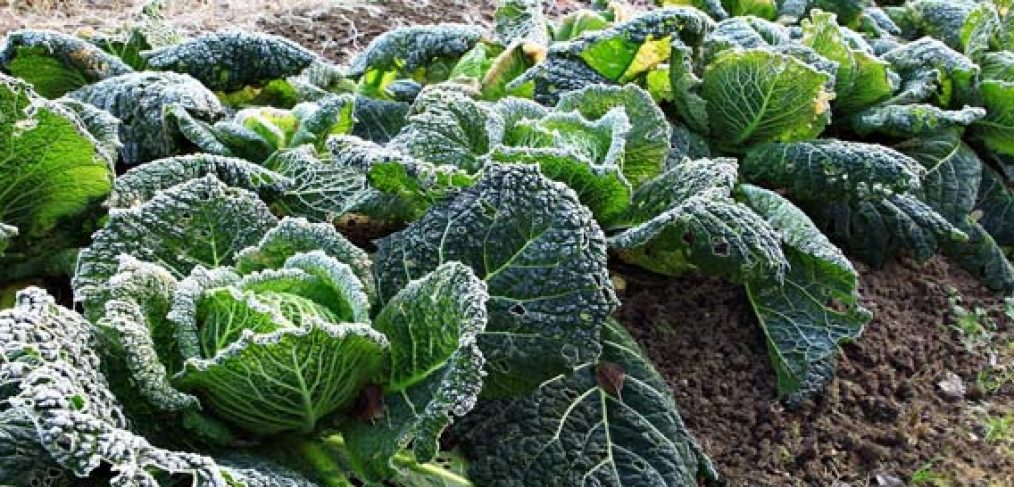 Don't Lose Your Precious Plants to Frost