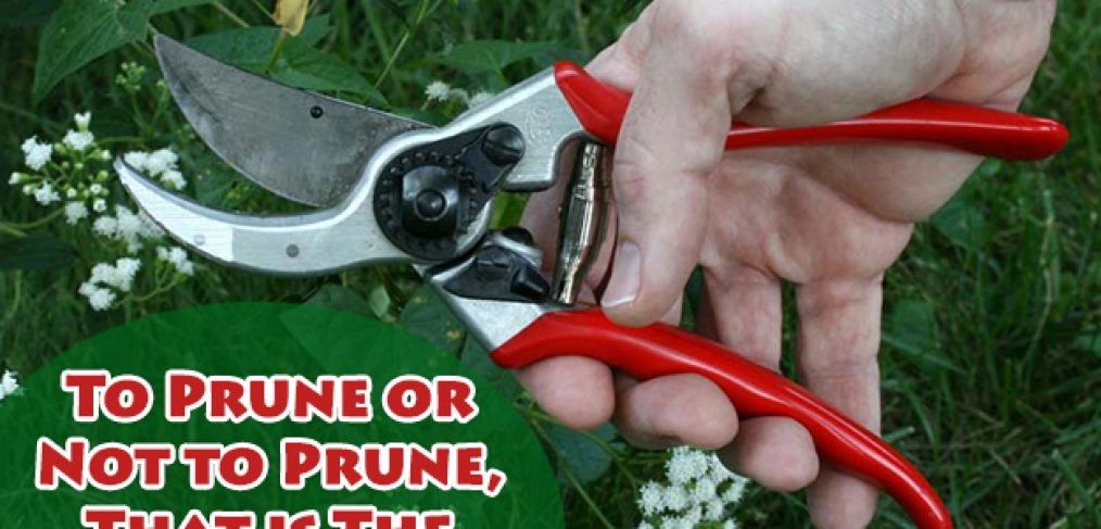 It's Pruning Season