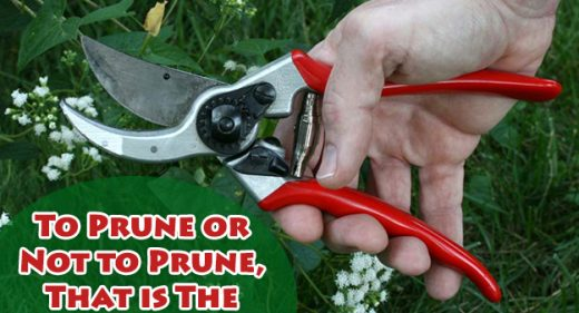 It's Pruning Season