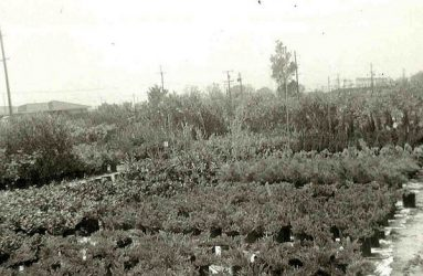 White Forest Nursery - About our History
