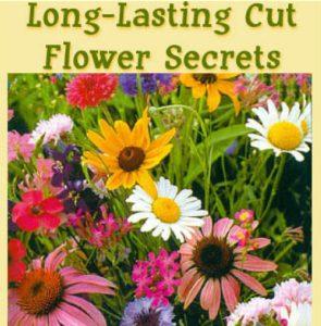 long-lastingcut-flowerscret