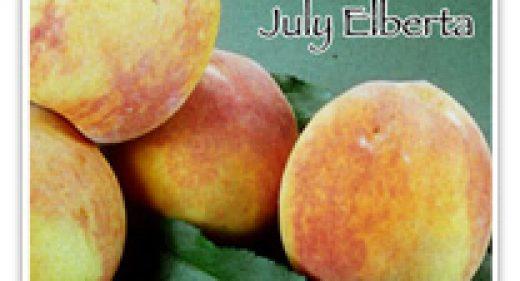 PEACH ELBERTA JULY