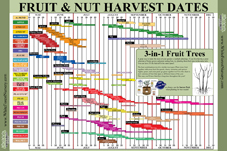 Download Fruit Harvest Chart