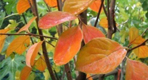 Fruit Tree TLC