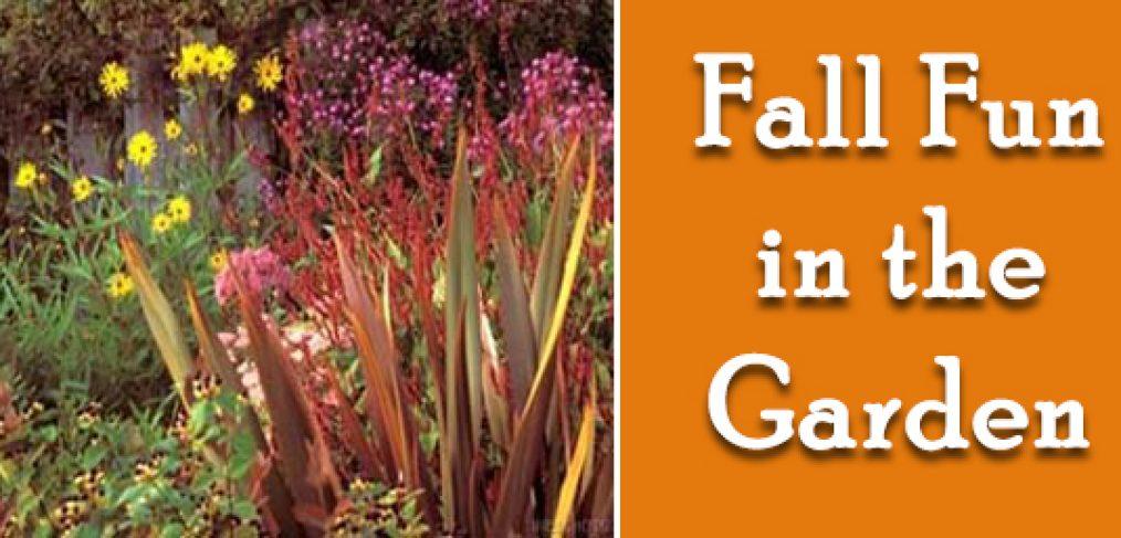 Fall Fun in the Garden