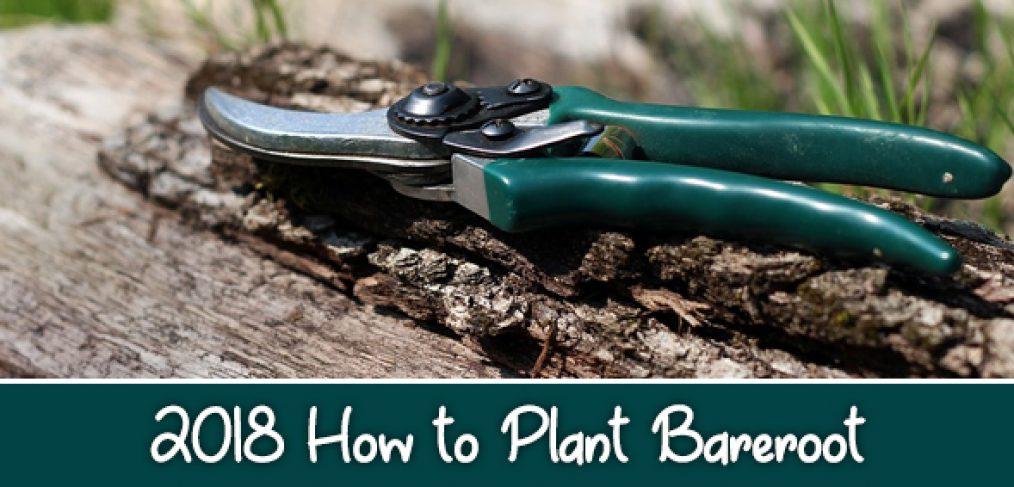 How to plant 2018 Bareroot