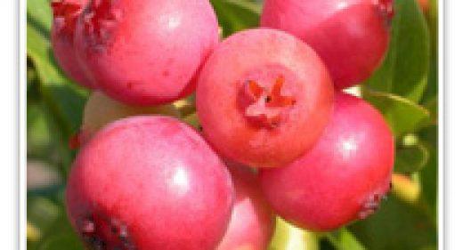 BLUEBERRY PINK LEMONADE