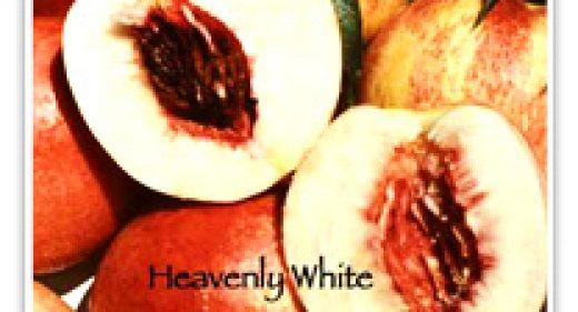 NECTARINE HEAVENLY WHITE