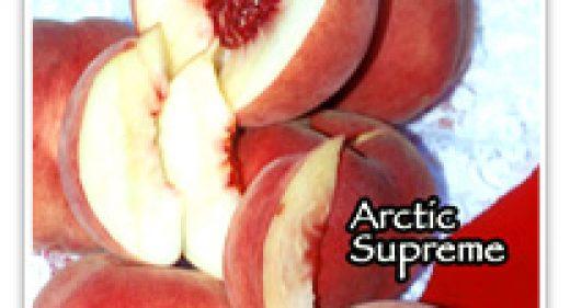 PEACH ARCTIC SUPREME