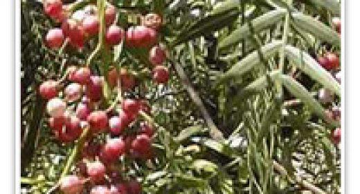 pepper-california