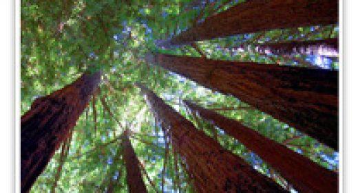 redwood-santacruz-coast
