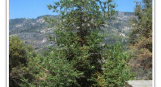 redwood-soquel-coastal
